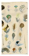 Vintage Feather Study-c Beach Towel