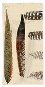 Vintage Feather Study-jp2085 Beach Towel