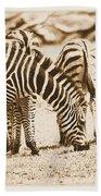 Vintage Zebras Beach Towel