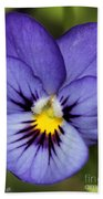 Viola Named Sorbet Blue Heaven Jump-up Beach Towel by J McCombie