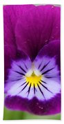 Viola Named Sorbet Plum Velvet Jump-up Beach Towel