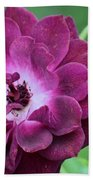 Violet Rose And Buds Beach Towel