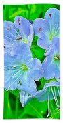 Virginia Waterleaf Near Alamo-michigan Beach Towel