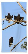 Vulture Tree Full Of Buzzards Beach Towel