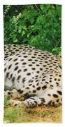 Waiting For Baby Cheetahs Beach Towel