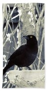 Waiting Grackle Beach Towel