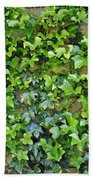 Wall Of Ivy Beach Towel