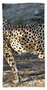 Wandering Cheetah Beach Towel