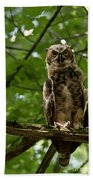 Warm Young Great Horned Owl Beach Towel