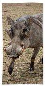 Warthog Approach Beach Towel