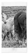 Wary Stallion Beach Towel