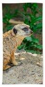 Watchful Meerkat Beach Towel