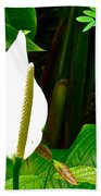 Water Arum In Park Across From Wat Phrathat Doi Suthep In Chiang Mai-thailand. Beach Towel