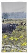 Water Buffaloes At Corroboree Billabong Beach Towel