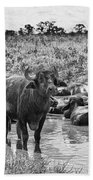 Water Buffaloes-black And White Beach Towel