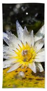 Water Lily 1 Beach Towel