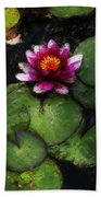 Water Lily Acanthius Beach Towel