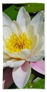 Water Lily Blossom Beach Towel