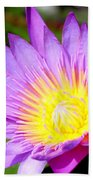 Water Lily In Purple Beach Towel