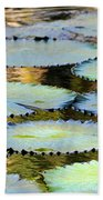 Water Lily Pads In The Morning Light Beach Towel