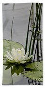 Water Lily Pictures 48 Beach Towel