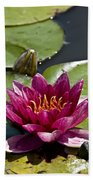Water Lily Pictures 66 Beach Towel