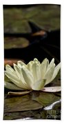 Water Lily Pictures 67 Beach Towel