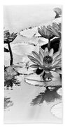 Water Lily Study - Bw Beach Towel