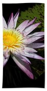 Water Lily With Lots Of Petals Beach Towel