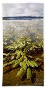 Water Plant Beach Towel