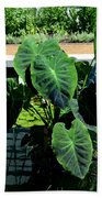 Water Plants Beach Towel