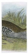 Water Rail Beach Towel