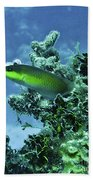 Water World Three Beach Towel