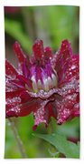 Waterdrops On Petals  Beach Towel