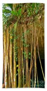Waterfall Of Jungle Tree Roots Beach Towel