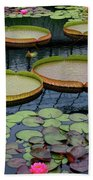 Waterlilies And Platters 2 Beach Towel by Byron Varvarigos