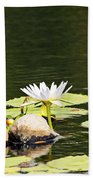 Waterlily And Coconuts Beach Towel