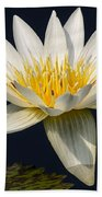 Waterlily And Pad Beach Towel by Susan Candelario