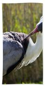 Wattled Crane Beach Towel