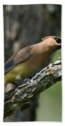 Waxwing Lunchtime Beach Towel