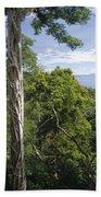 Weeping Fig And Host Natu Tree Sulawesi Beach Towel