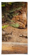 Welcome Home - Sequoia National Forest Beach Towel
