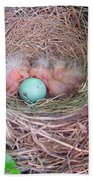 Welcome To The World - Hatching Baby Robin Beach Towel