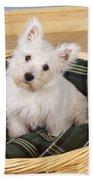 West Highland White Terrier Puppy Beach Towel
