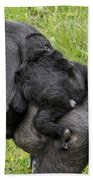 Western Lowland Gorilla 1 Beach Towel