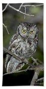 Western Screech Owl Beach Towel