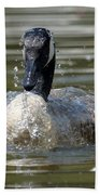 Wet And Wild - Canadian Goose Beach Towel