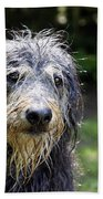 Wet Dog Beach Towel