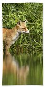 What Does The Fox See Beach Towel