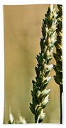 Wheat Stalks Beach Towel
